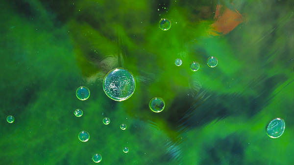 141b.Ice.green_bubble.e-card