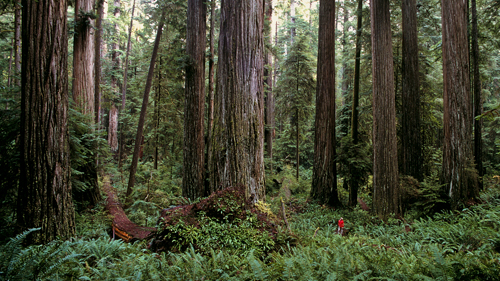 NP.Redwoods.Nat.E-card3