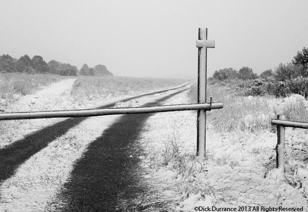 Winter_Choices.eCard